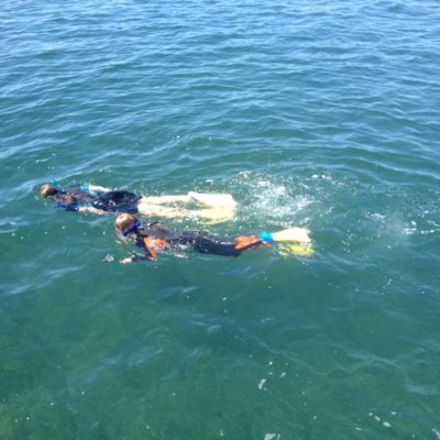 Snorkelling in the Bay by Mornington Sea Glass